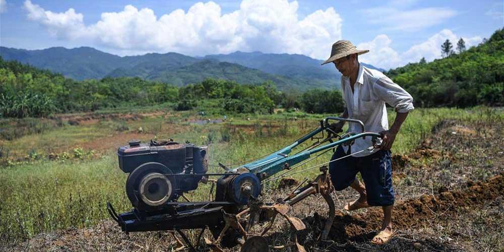 Trabalhos agrícolas em Hainan no sul da China