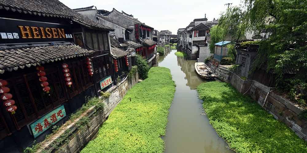 Pinheirinhas-d'água ajudam na purificação de rio em vila no leste da China
