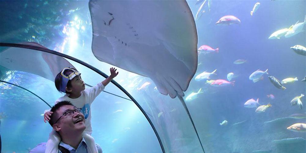 Chongqing abre Aquário da vida marinha