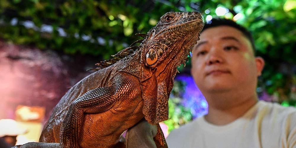 Exposição de lagartos é realizada em Harbin no nordeste da China