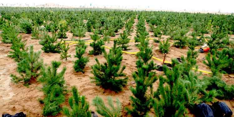 China compartilha experiências de transformação de deserto