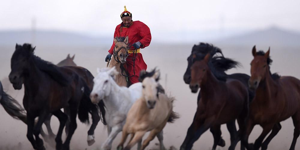 Esforços para proteger cultura de cavalos na Mongólia Interior