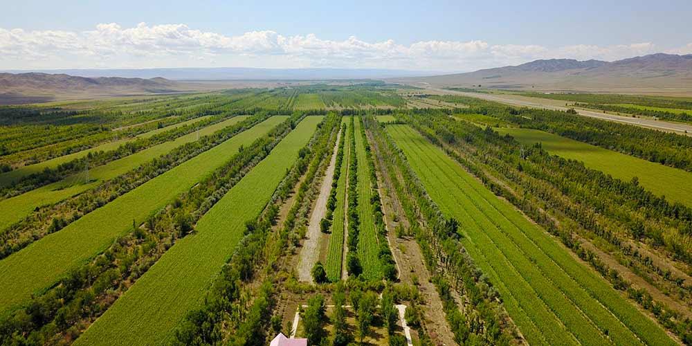 """""""Passagem ventosa"""" é lar de grandes áreas de oásis em Xinjiang"""