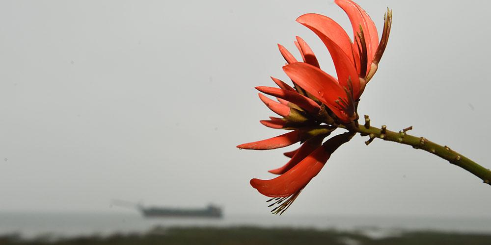 Encontro entre passado e presente: Cidade portuária de Quanzhou