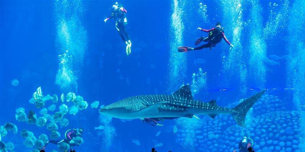 Turistas mergulham no parque oceânico em Zhuhai, no sul da China