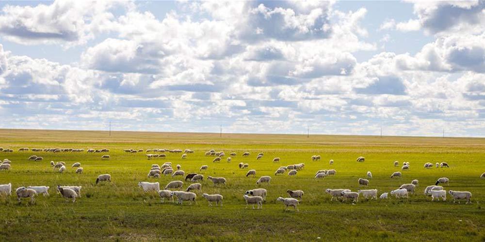 Pastagens em Hulun Buir, Região Autônoma da Mongólia Interior