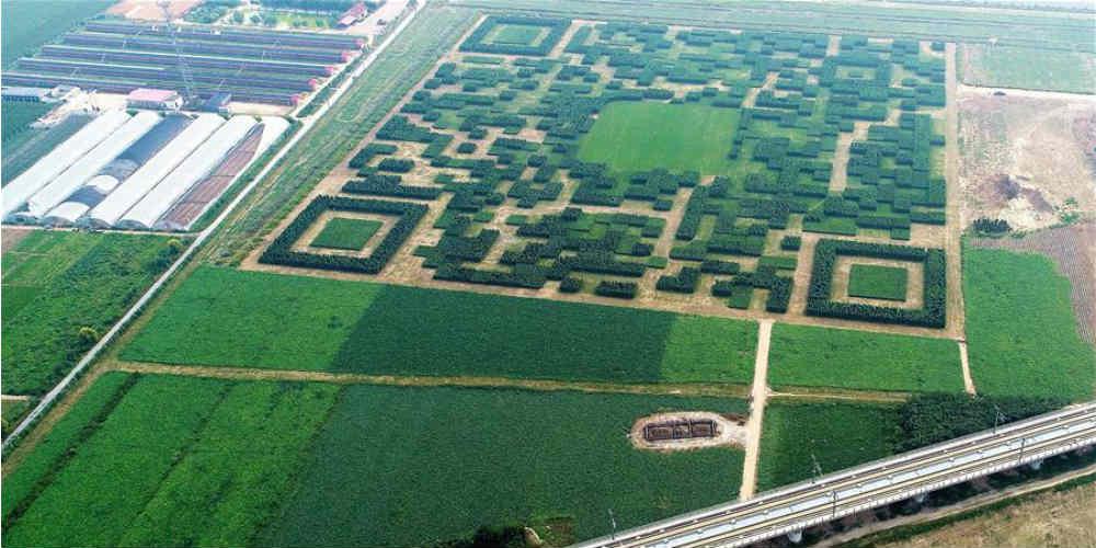 Código QR formado por 130.000 árvores em Hebei