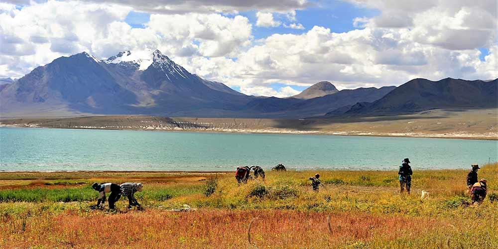Aldeões colhem forragens no Tibete