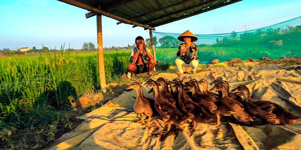 Sistema de cultivo ecológico em Anhui