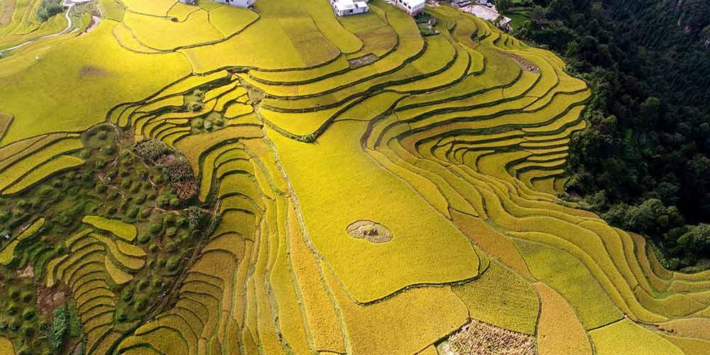 Em imagens: Campos de arroz ao redor da China