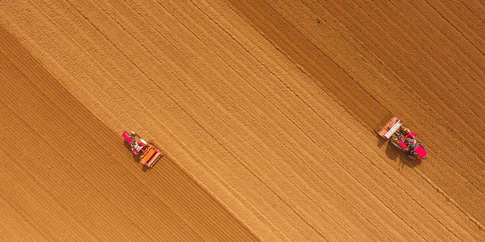 Semeadura de trigo em Shandong