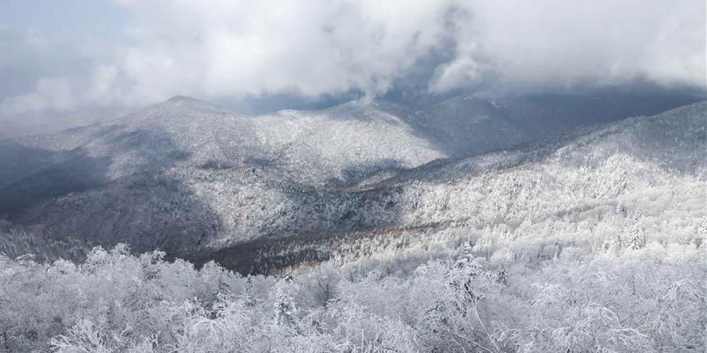 Em imagens: Paisagem de neve em Mudanjiang, província de Heilongjiang