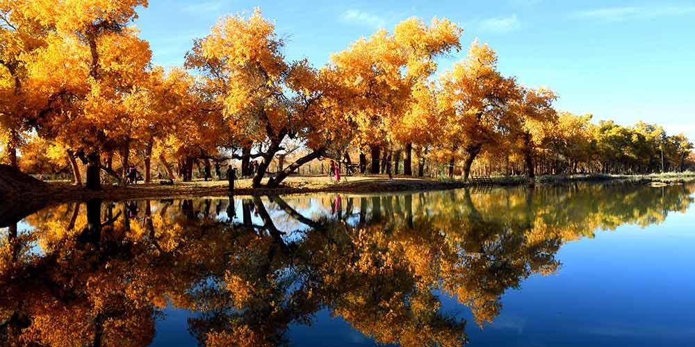 Paisagem das árvores populus euphratica na Região Autônoma da Mongólia Interior