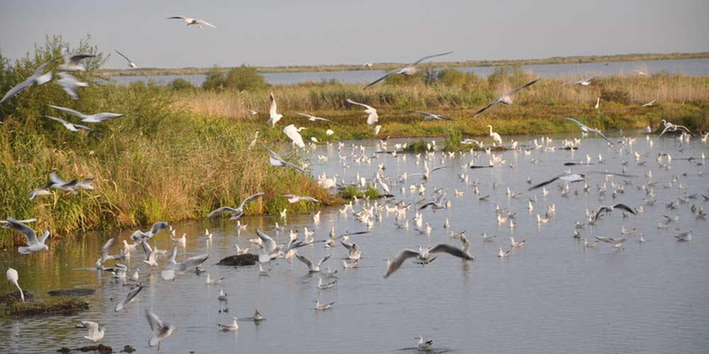 Reserva natural na China salva 130 pássaros ameaçados de extinção