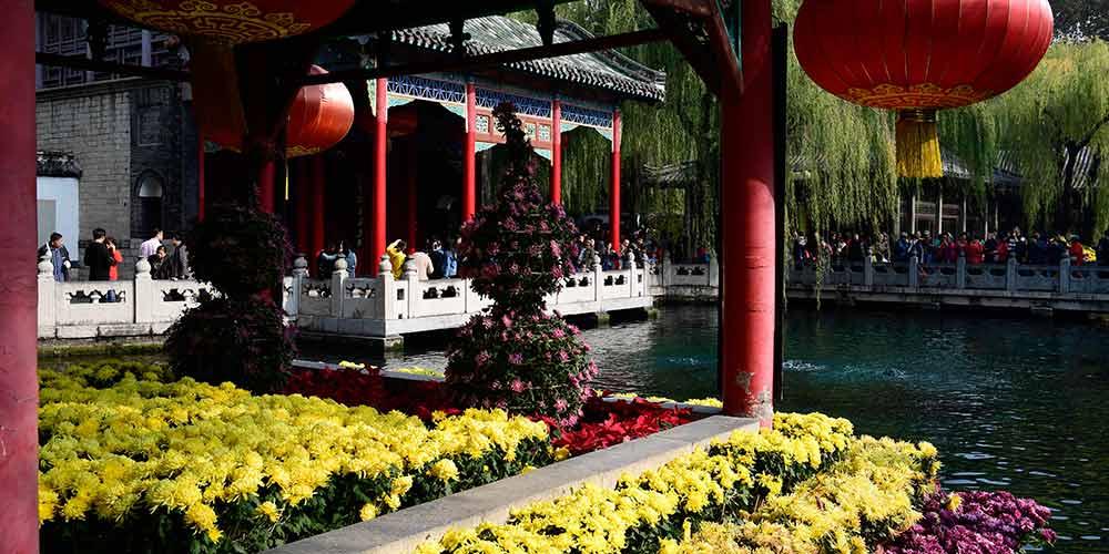 Crisântemos em floração no Parque da Fonte de Baotu em Jinan