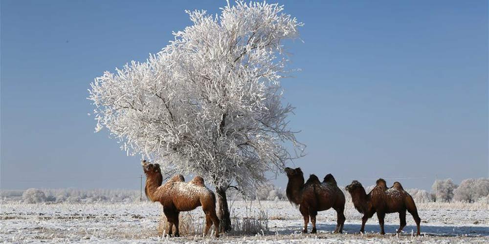 Paisagem de geada em Altay, Região Autônoma Uigur de Xinjiang