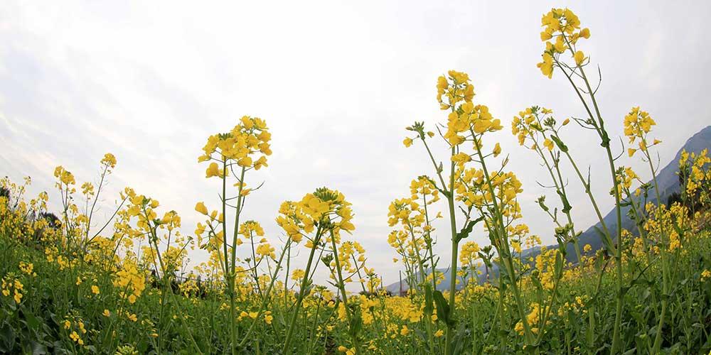 """Flores desabrocham no dia """"Lichun"""" em toda a China"""