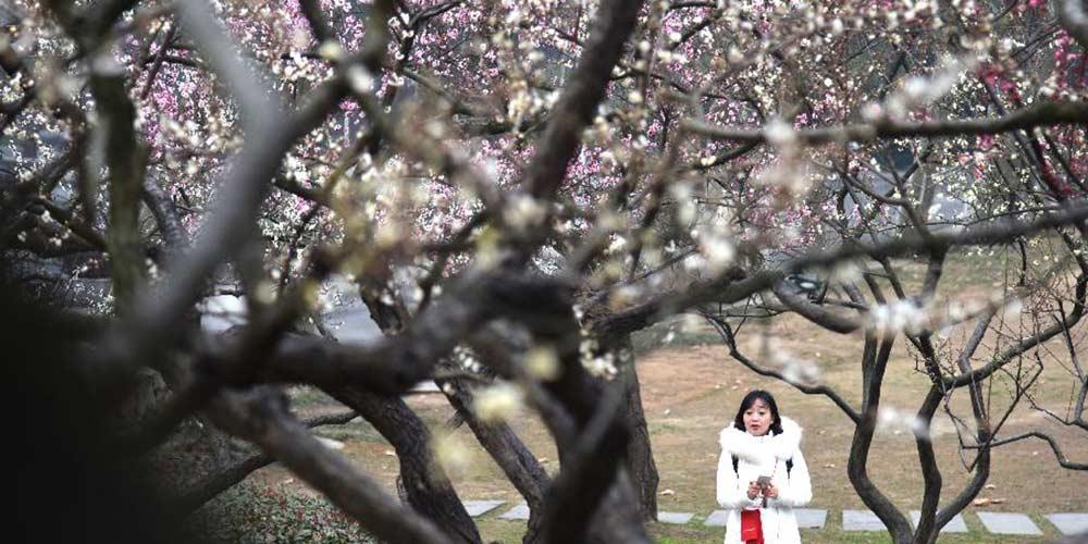 Flores de inverno desabrocham em Wuhan