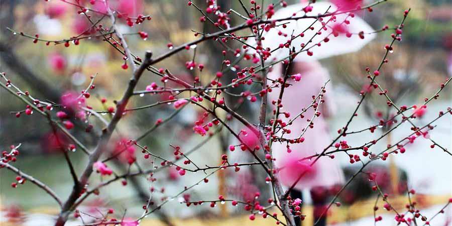Flores na chuva em Suzhou, no leste da China