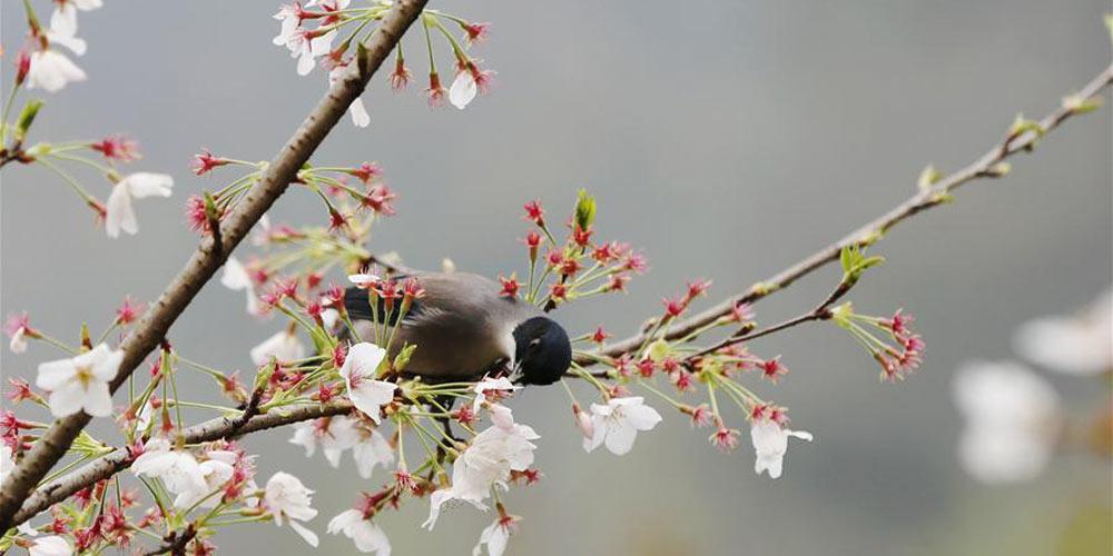 Paisagens da primavera
