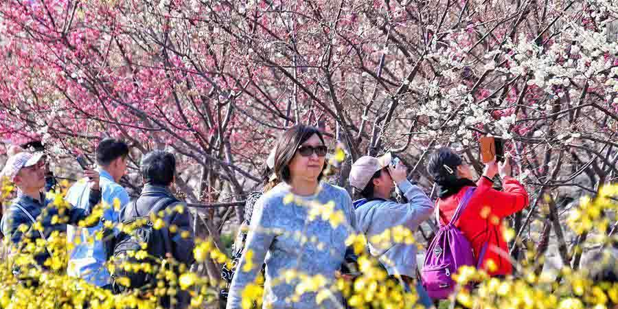 Parque das Relíquias da Muralha da Dinastia Ming colorido pelas flores