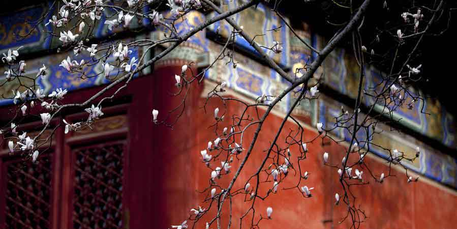 Paisagem da primavera no Templo Tanzhe em Beijing