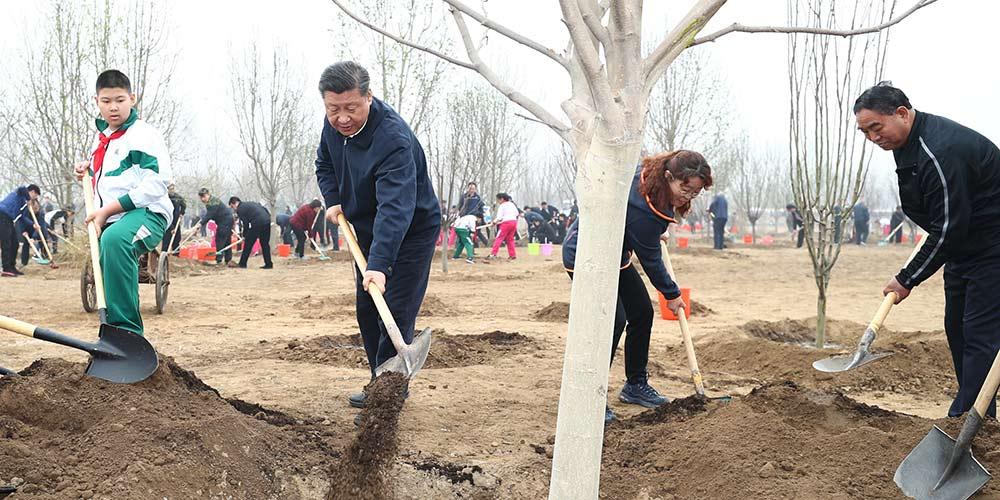 Presidente chinês sublinha abordagem centrada no povo em programas de reflorestamento