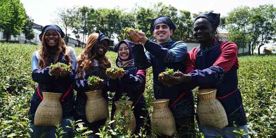 Estudantes estrangeiros aprendem sobre processo de produção de chá em Jiangsu