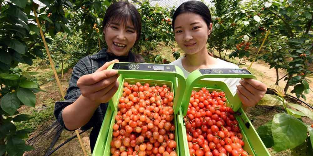 Novas tecnologias tornam a vida mais conveniente no distrito de Yujiang em Jiangxi