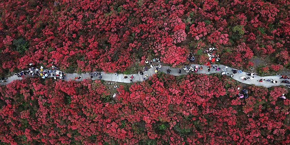 Flores da primavera florescem em toda a China