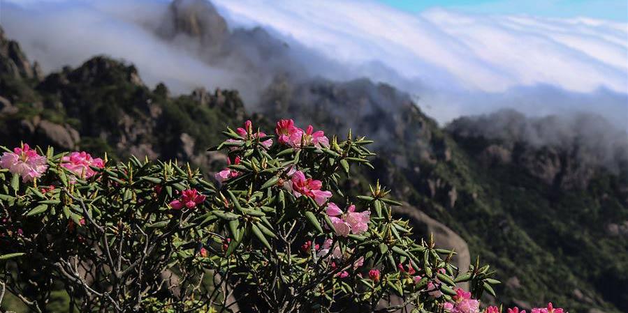 Paisagens da primavera na China