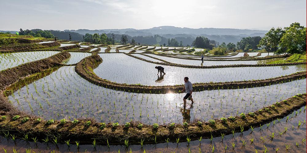 Galeria: Agricultores trabalham ao redor da China