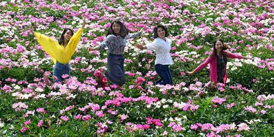 Flores de peônia em Shanxi, no norte da China