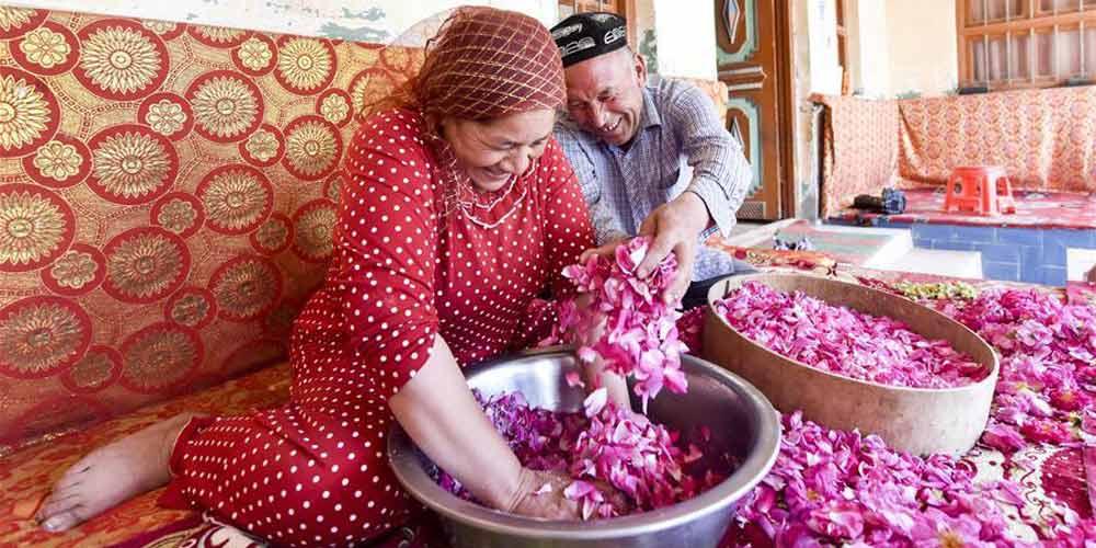 Produção de molho de rosas gera renda para aldeões em Xinjiang