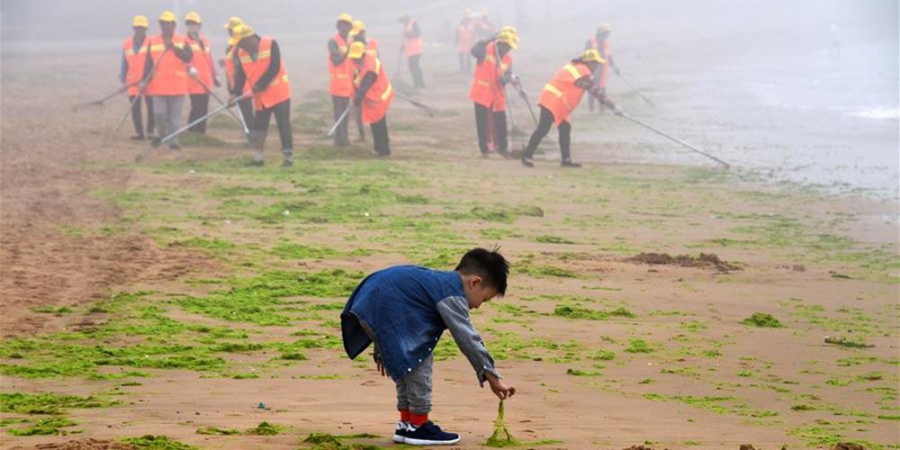 Trabalhadores removem algas marinhas de praias em Qingdao