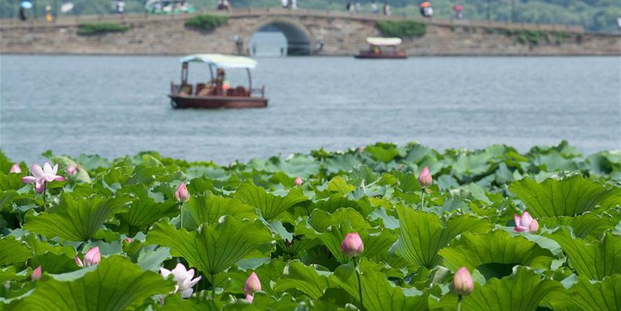 Flores de lótus no Lago Oeste em Hangzhou