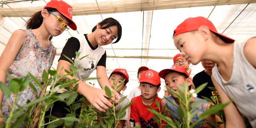 Crianças adquirem conhecimentos sobre agricultura durante férias de verão em Hebei