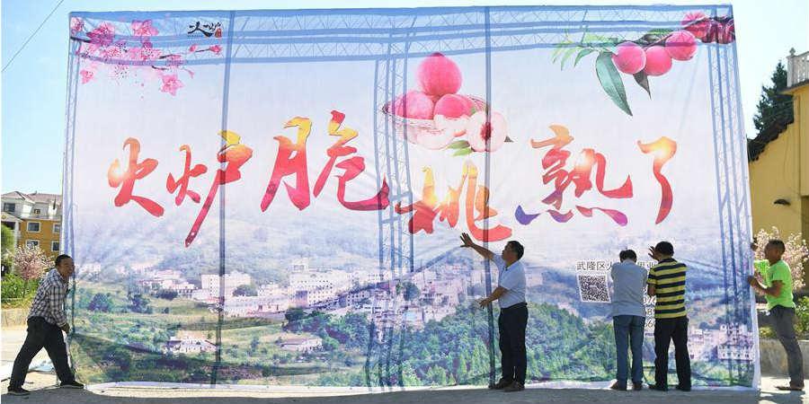 Aldeão de Chonqging desenvolve variedade de pêssego tolerante à desertificação e ajuda aldeia a sair da pobreza