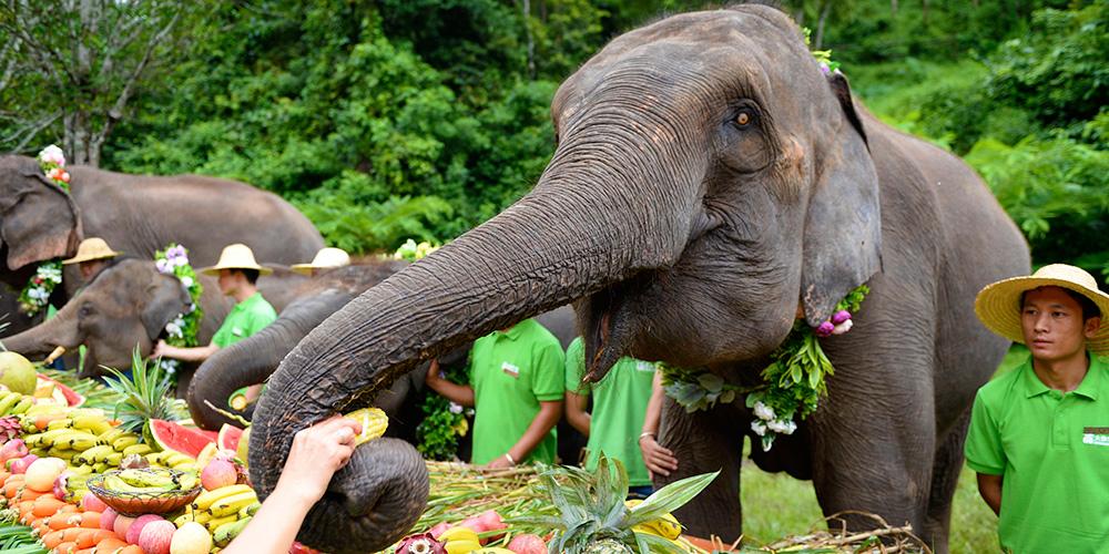 Dia Mundial do Elefante é celebrado em Yunnan, sudoeste da China