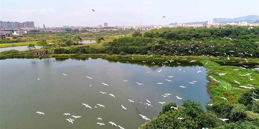 Parque Florestal em Jiangxi, leste da China