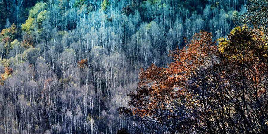 Galeria: Fazenda florestal Haodifang em Shanxi