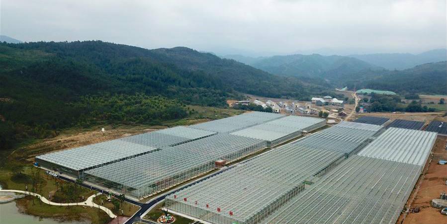 Complexo agrícola de Jianghe desenvolve plantio de vegetais alpinos em Jiangxi