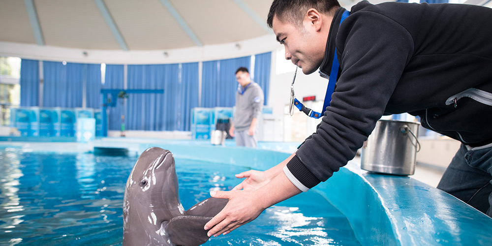 Galeria: Proteção dos golfinhos do Rio Yangtzé em Wuhan