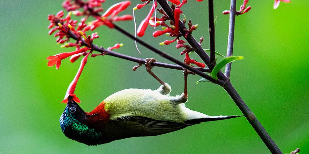 Galeria: Beija-flores no Parque Florestal Nacional de Fuzhou
