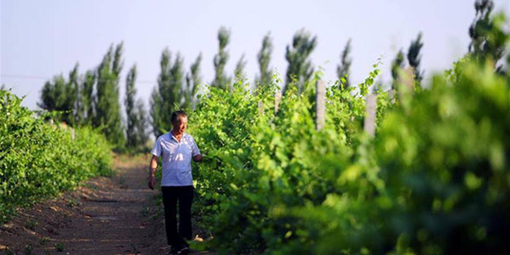China avançará campanha de florestação