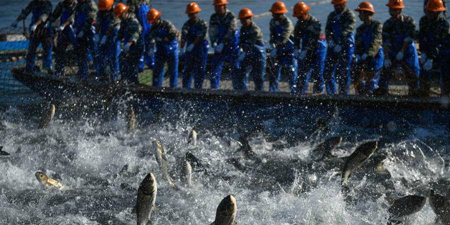 Pescadores participam de grande pescaria no lago Qiandao em Hangzhou