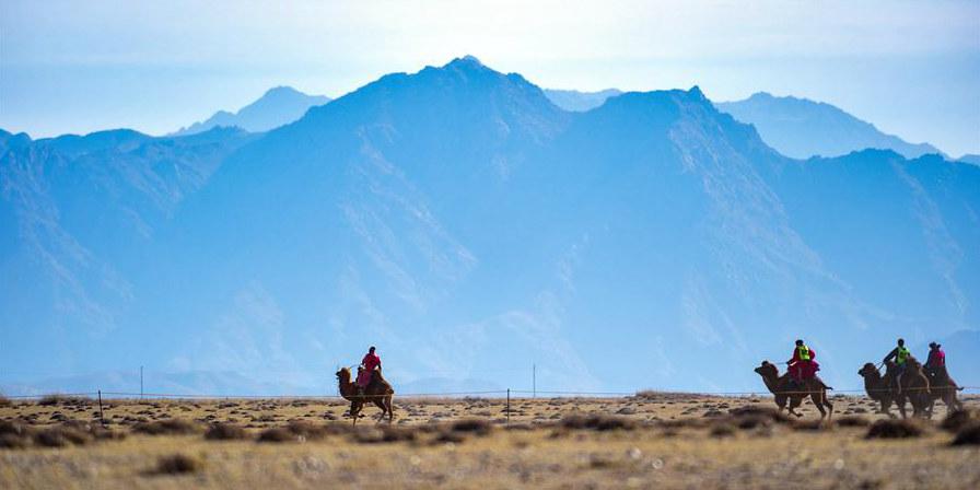 Fotos: Festival cultural internacional de camelos na Mongólia Interior