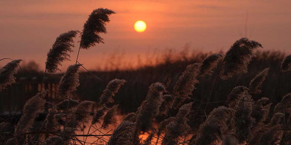 Galeria: Nascer do sol em Baiyangdian