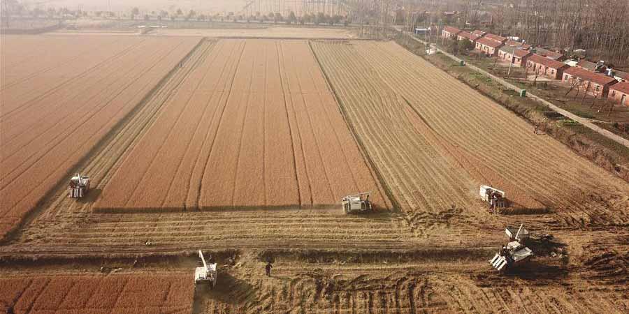 Agricultores colhem arroz em Jiangsu