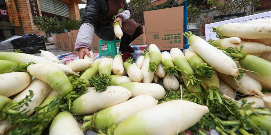 Plantação de rabanete branco ajuda moradores a aumentar renda em Guizhou